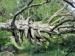 träd med tickor