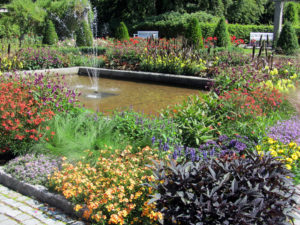 Rosengården sommar