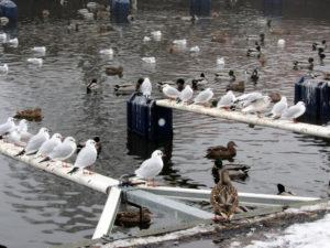 fåglar Näsviken